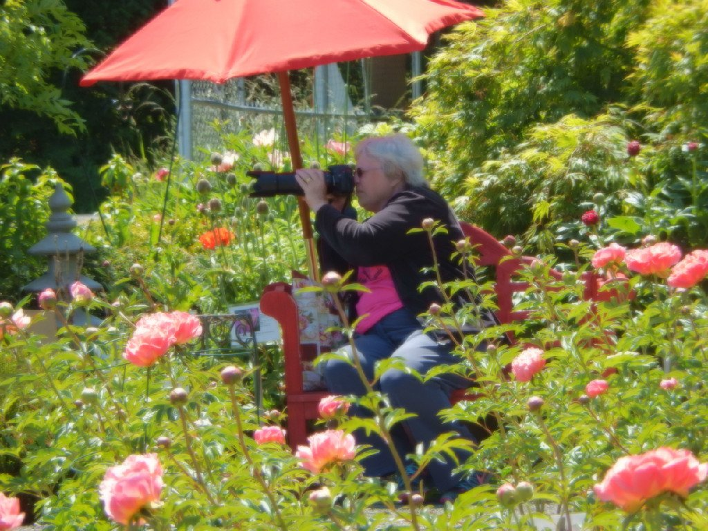 Through the Lens at Peony Farm